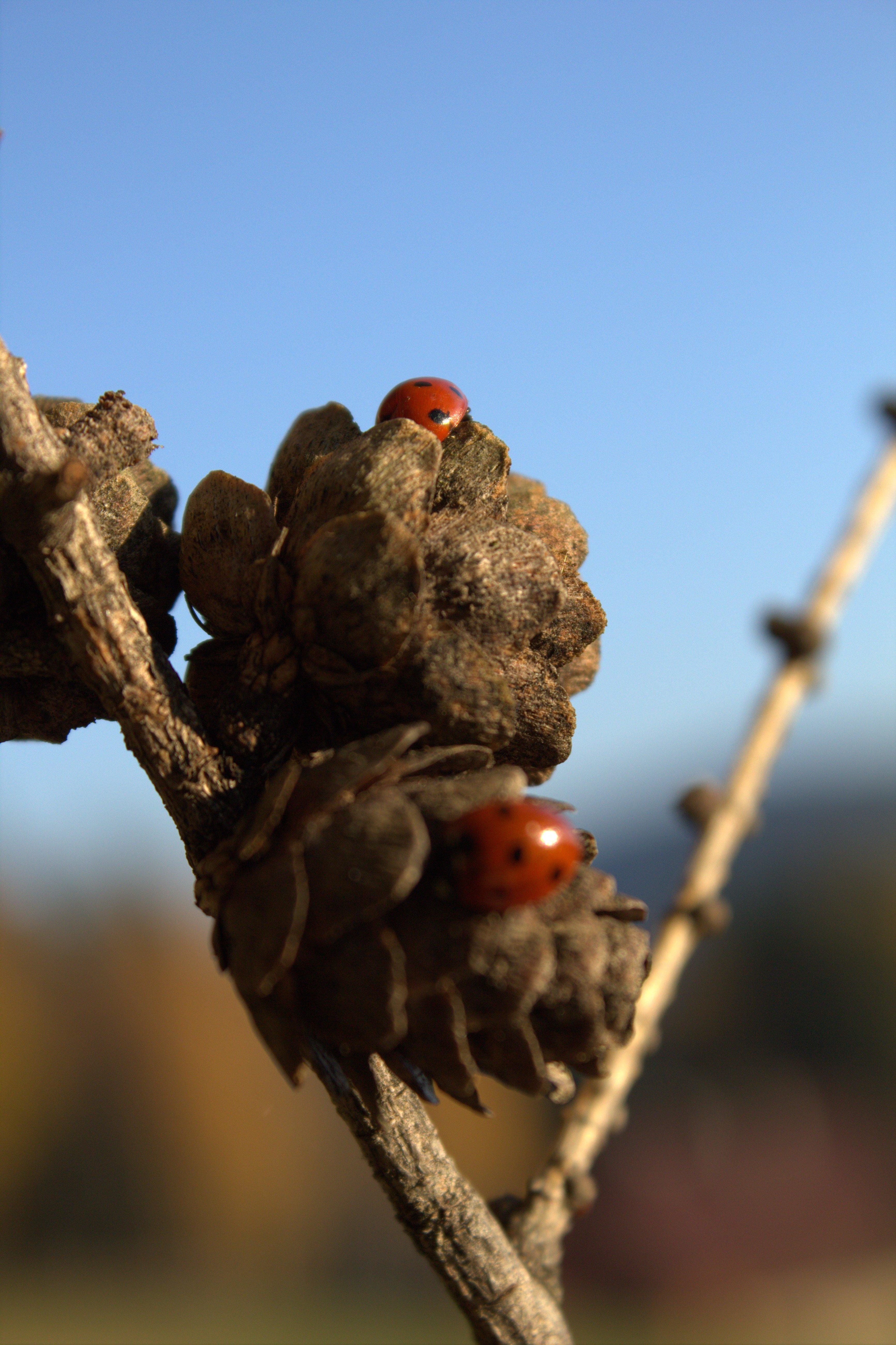 Podzim Berusky